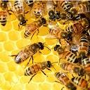 El mundo sin abejas no es posible
