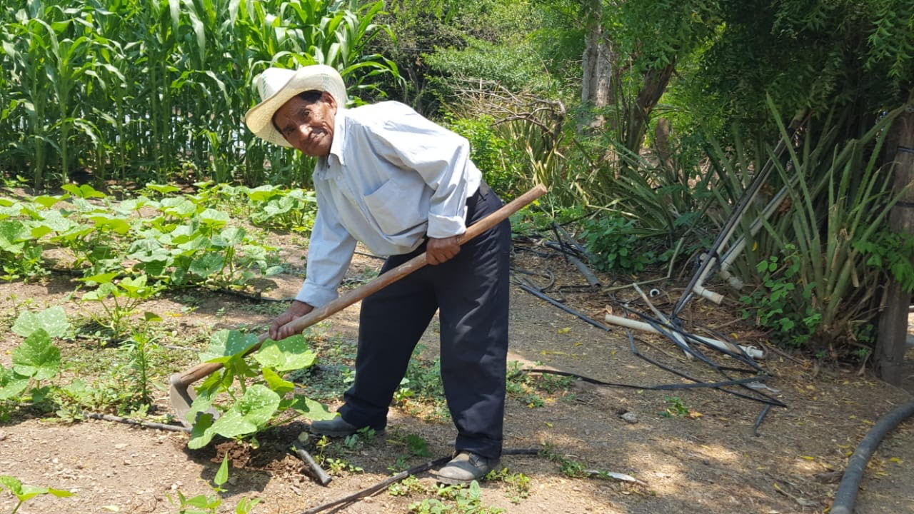 Invaluable labor: agricultores garantizan cosecha