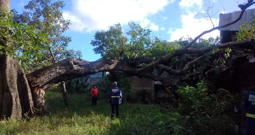 Mientras dormían, cuatro familias vieron interrumpidos sus sueños tras que un antiguo y gran árbol cayera sobre sus viviendas.