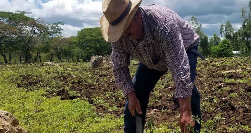 Tras un cruel ciclo de postrera, la UNAG Estelí apoyará a pequeños productores con bancos de semillas para garantizar el ciclo de primera.