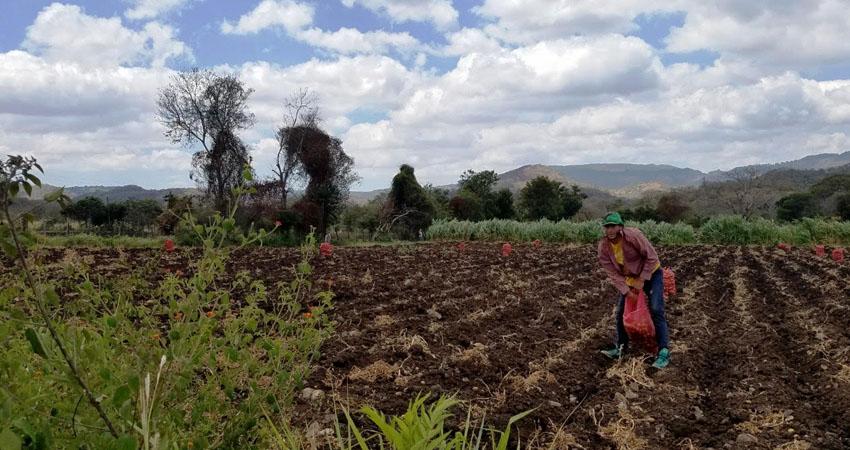 Las hortalizas serán el complemento que necesitan los productores. Foto: Archivo/Radio ABC Stereo