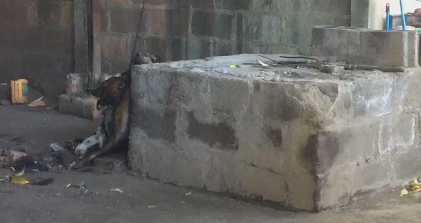 La mascota aparentemente llevaba días abandonada. Foto: Katia Reyes