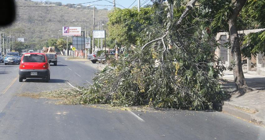 Estelí, Jinotega y Matagalpa son los departamentos donde los vientos seguirán siendo más fuertes.