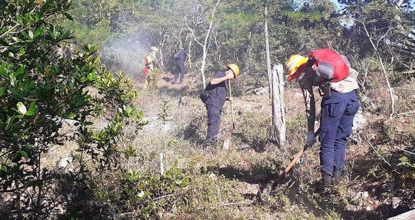 Las afectaciones se reportan en fincas mayoritariamente boscosas, donde el fuego ha dañado árboles de pino y roble.