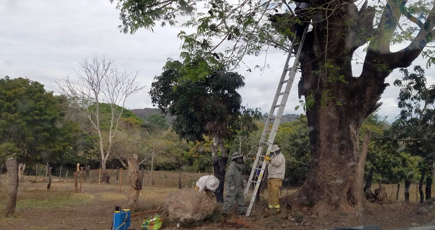 La emergencia fue atendida por los bomberos. Foto: Roberto Mora/Radio ABC Stereo