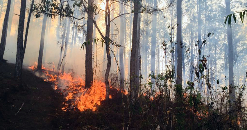 Fuego arrasó con flora y fauna en Jinotega