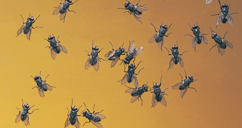 Nubes de moscas y zancudos. Mantener limpio es indispensable para evitar enfermedades diarreicas y el dengue.