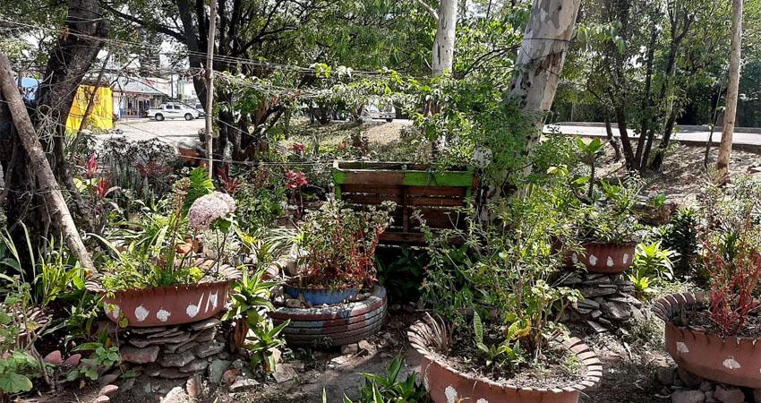 Iniciativa ciudadana. En un terreno del barrio Jaime Úbeda de Estelí los pobladores decidieron crear un jardín comunitario lleno de plantas y vida, entre todos lo cuidan y esperan convertirlo en un espacio para estar en contacto con la naturaleza.