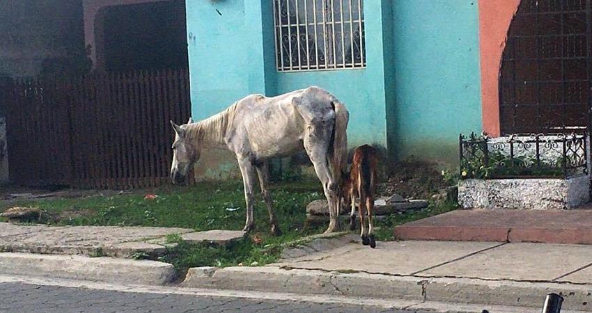 Piden mano dura a dueños de animales que deambulan en las calles