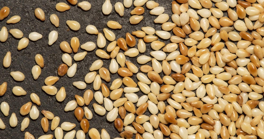 Lluvias podrían causar pérdidas en siembras de ajonjolí