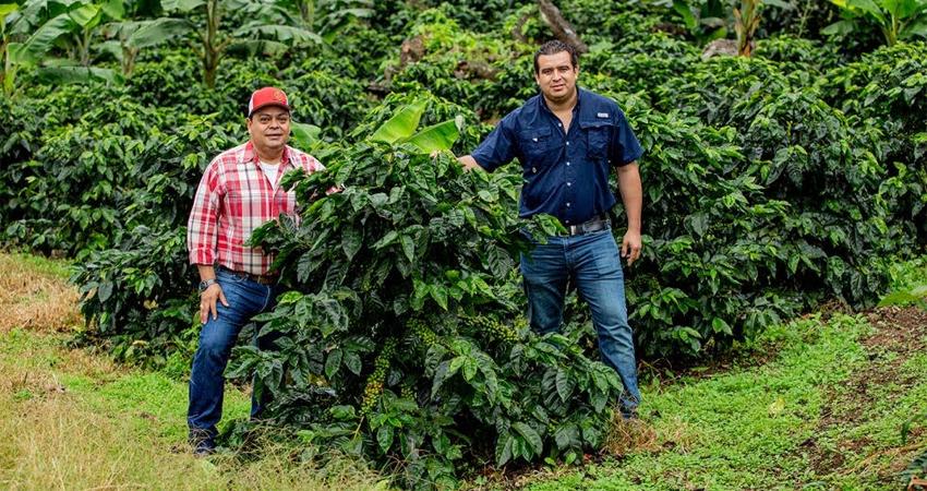 Empresa esteliana se ha especializado en la comercialización de café para exportar a mercados europeos y estadounidenses, garantizando precios justos a los productores.